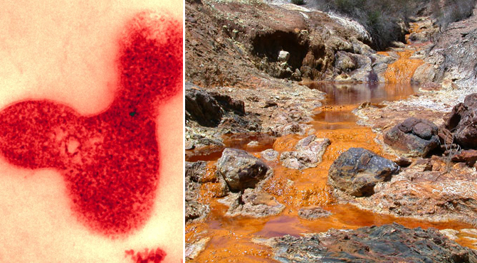 the adaptation of archaea to acidity